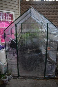 Small plastic 6 by 6 foot greenhouse