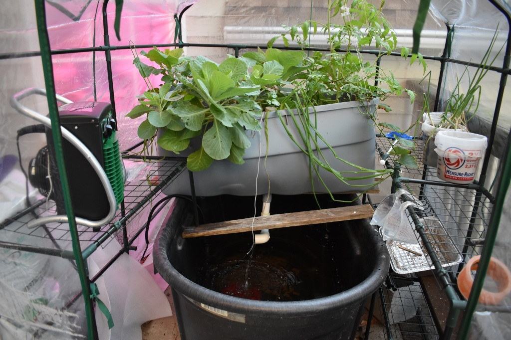 Inside greenhouse showing stock tank reservoir with plastic tub flood and drain planting bed with green plants.
